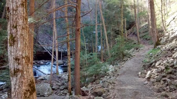Trail, trees, & terrain